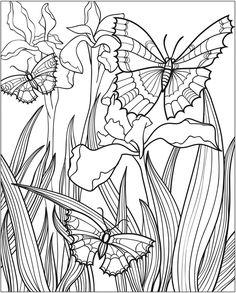 Butterfly Papillon Mariposas Vlinders Wings Gracefull Amazing Coloring pages colouring adult detailed advanced printable Kleuren voor volwassenen coloriage pour adulte anti-stress kleurplaat voor volwassenen Line Art Black and White http://www.doverpublications.com/zb/samples/802175/sample8d.html