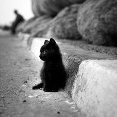 A tiny black kitten sitting on the street.