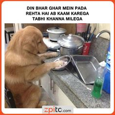 Most Hilarious Memes, Crazy Funny Memes, True Memes, Funny Facts, Stupid Funny, Memes Humor, Funny Morning Memes, Morning Humor, Top Funny