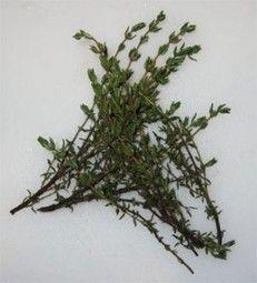41 Ideas De Plantas Medicinales Plantas Medicinales Plantas Remedios Naturales