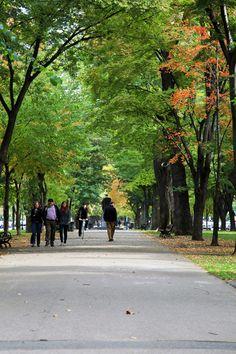 Walk down Commonwealth Ave towards the Boston Public Gardens.