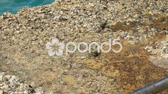 Crabs On Old Fishing Boat Concrete Pier Tropical Water Wildlife Thailand - Stock Footage | by RyanJonesFilms