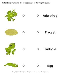 ... life cycle worksheets for kindergarten more kindergarten frog cycle