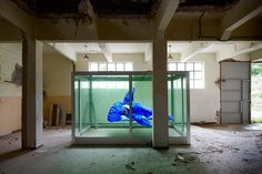 alfonso batalla: a dolphin for damien