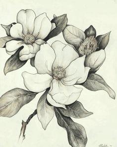 Magnolia tree tattoo u. Flor Magnolia, Magnolia Trees, Magnolia Flower, Pencil Drawings Of Flowers, Flower Sketches, Art Drawings, Illustration Botanique, Botanical Illustration, 16 Tattoo
