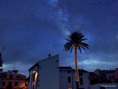 Palma illuminata per le Feste a Banari...