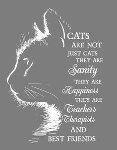 Pretty Cats, Beautiful Cats, Animals Beautiful, Cat Quotes, Animal Quotes, Crazy Cat Lady, Crazy Cats, Animals And Pets, Funny Animals