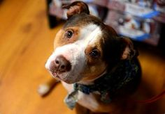 """""""I kept my promise that Spikey would be cared for if anything ever happened to my friend,"""" Tammy Katzin said."""