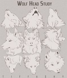Drawing Animals Wolf Head Study/Tutorial by TIFFASHY - Welcome to Drawing Den, an online collection of the most helpful art resources and tutorials! Animal Sketches, Animal Drawings, Drawing Sketches, Drawing Animals, Wolf Drawings, Drawing Tips, Manga Drawing, Anime Wolf Drawing, Art Reference Poses
