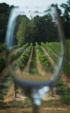 Voir la vie en verre :) - Niagara on the Lake, Ontario Glass Photography, Digital Photography, Photography Ideas, Niagara Region, In Vino Veritas, Italian Wine, Through The Looking Glass, Wine And Spirits, Wine Cellar