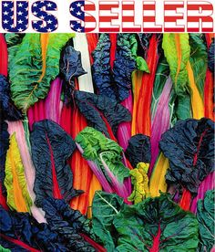 30 Five Color Silverbeet Swiss Chard Mix Rainbow Heirloom Non GMO Organically G | eBay