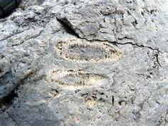 Limestone fossil]