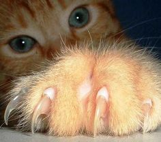 cropped from the pin of Planet Purr thanks Renee.