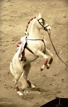 Remate.Un gran caballo de la cuadra de Diego Ventura