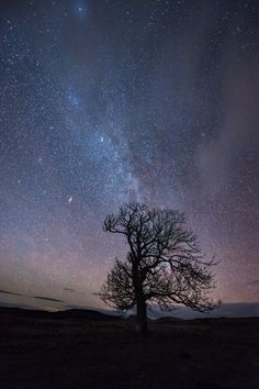 Cairngorms Night Sky Photography - Milky Way over lone tree in the Milky Way Photography, Night Photography, Cairngorms, Lone Tree, Old Images, Dark Skies, Photography Workshops, Scottish Highlands, Night Skies