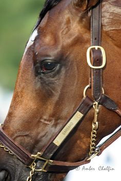 Churchill Downs  ~ Barbaro    this was the closest to a triple crown winner my generation would've seen....i love/loved this horse.