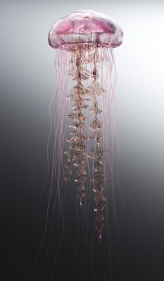 Steampunk Tendencies — Jellyfish Rise by James Gardner Jellyfish Tank, Jellyfish Aquarium, Jellyfish Quotes, Jellyfish Facts, Colorful Jellyfish, Colorful Fish, Tropical Fish, Aquarium Fish, Jellyfish Tentacles