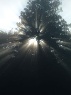 sunlight through the treetops in black and white...