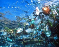 The North Pacific Gyre An island of trash twice the size of Texas floats in the middle of the Pacific Ocean, circulated by the currents of the North Pacific Gyre. The trash, which is mostly made up of plastic debris, floats as deep as 30 feet below the surface.