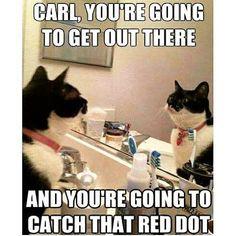 Go, Carl!