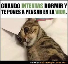 grumpy memes laughing so hard Cats are cute and sometimes unintentionally do stupid funny things, so we have collected some the funniest and most hilarious cat memes and pictures hope you will enjoy em. Funny Spanish Memes, Spanish Humor, Funny Images, Funny Pictures, Cute Funny Animals, Funny Dogs, Animal Memes, Cat Memes, Really Funny