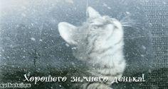 Снегопад. Живые картинки. Картинки кошек. | Все для фотошопа. Фотошоп для всех