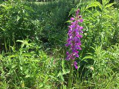 Parsley, Romania, Herbs, Plants, Herb, Flora, Planters