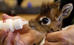 A baby giraffe! Aww so cute
