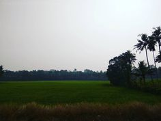 Paddy Field... It's the beauty of Kerala... I  This Greenery.... Awesome ... . . . . . . . . . #landscape #amazing #view #trip #tree #sky #mountains #nature #landscape_lovers #landscapelovers #landscape_lover #landscapehunter #landscapes #toptags #landscapestyles #trees #treestagram #treescape #naturelovers #naturelover #nature_seekers #natureonly #nature_shooters #nature_prefection #naturediversity #naturephotography #naturewalk #naturegram #naturelove #naturephoto