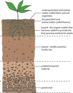 soil layers | Science: Getting to Know Rocks and Soil (Grade 7) | Think Tank Centre