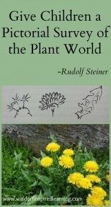Give Children a Pictorial Survey of the Plant World with lots of experiences in the outdoors. Nature study and adventures with children are great homeschooling activities. ⋆ Waldorf-Inspired Learning