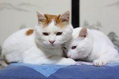 CyBeRGaTa - Cats, Memes, New Mexico - Shironeko & Mimi かご猫 -みみ