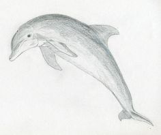 easy pencil drawings of animals for beginners - Google Search