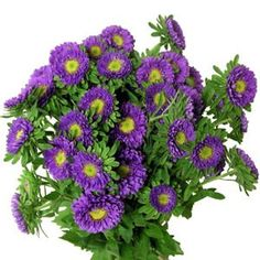 Matsumoto Aster - Lavender Mayesh Flower Library Available year round Beautiful Flowers, Florist, Lavender, Flowers, Bloom, Aster Flower, Aster, Wholesale Florist