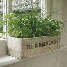 The Kitchen Garden herb growing kit