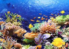 korallenriff im Neukaledonien Reiseführer http://www.abenteurer.net/3855-neukaledonien-reisefuehrer/