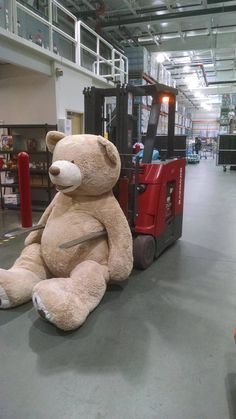 We Need To Talk About This Gigantic Stuffed Bear From Costco