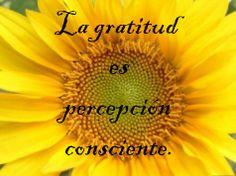 La gratitud es una de las emociones mas potentes en el universo.