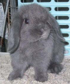 0d2abcb1eaa 93 Best BUNNIES!!! images