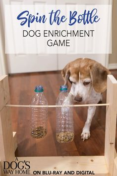Dig into the recycling bin for empty plastic bottles to make a fun dog activity for your favorite pet! Get the tutorial for this DIY dog enrichment game, plus learn how to craft dog name tags and an easy rope toy for your dog made from upcycled leggings! Diy Pet, Dog Enrichment, Dog Name Tags, Dog Id Tags, Empty Plastic Bottles, Dog Games, Cat Dog, Dog Crafts, Kids Crafts