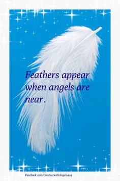 Feathers appear when angels are near. www.Facebook.com/ConnectwithAngels444
