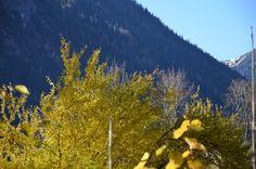 #Wandern in #Oberbayern nahe Miesbach - einfach schön die #Berge im #Herbst