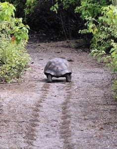 Turtles can teach us a lot...take things slowly, enjoy each step...  Look at his footprints :)