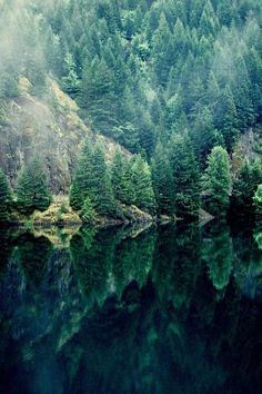 forest, lake, spruce, pine trees, reflection