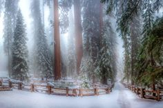 This is the Sequoia forest it's a panorama of 4 photos. It was very cold and there was a lot of. by Serge Ramelli - Photo 166390119 / Sequoia Forest, Places In California, California Destinations, Snowy Forest, 4 Photos, Nature Wallpaper, Winter White, Cool Pictures, Snowy Pictures