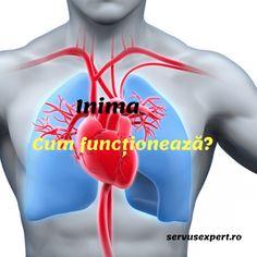 Inima și vasele de sânge. Cum sunt construite și cum funcționează? Lauren Sanchez, Good To Know, Health Fitness, Canada, Movies, Movie Posters, Tips, Varicose Veins, Anatomy