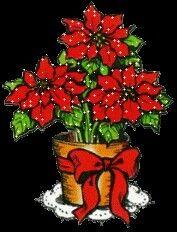 Christmas Poinsettia 🎄