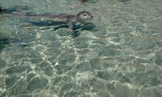 A little seal at the beach of Alimia Greece Islands, Crete, West Coast, Seal, Landscapes, Holiday, Dogs, Animals, Paisajes