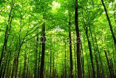 Wall Mural forest - Photo Wallpaper - nature • PIXERSIZE.com