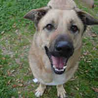Available Pets At Galveston County Animal Resource Center In Texas City Texas In 2020 Animals German Shepherd Dogs Shepherd Dog